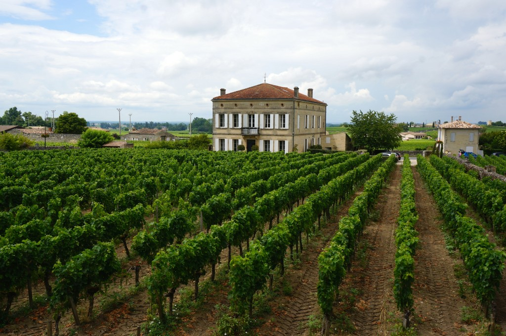 New Grapes Approved in Bordeaux to Combat Climate Change