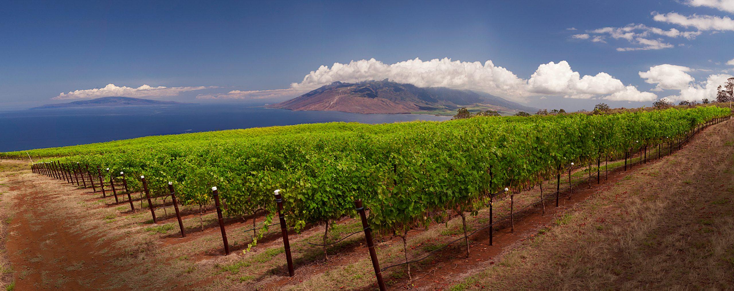 Terroir of Aloha: Syrah Finds Its Hawai'ian Home