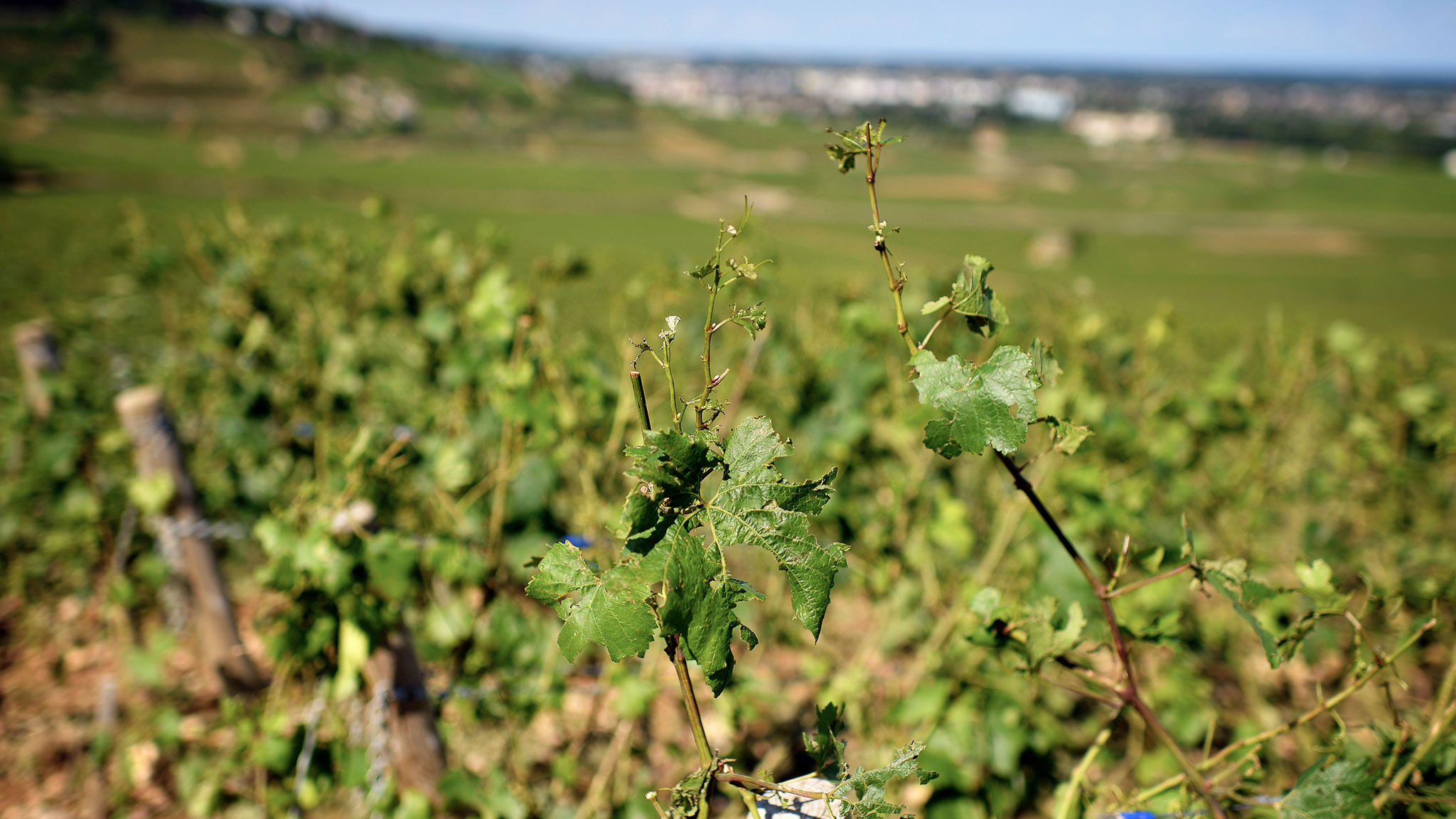 Philippe Pacalet – Wines of Elegance and Authenticity