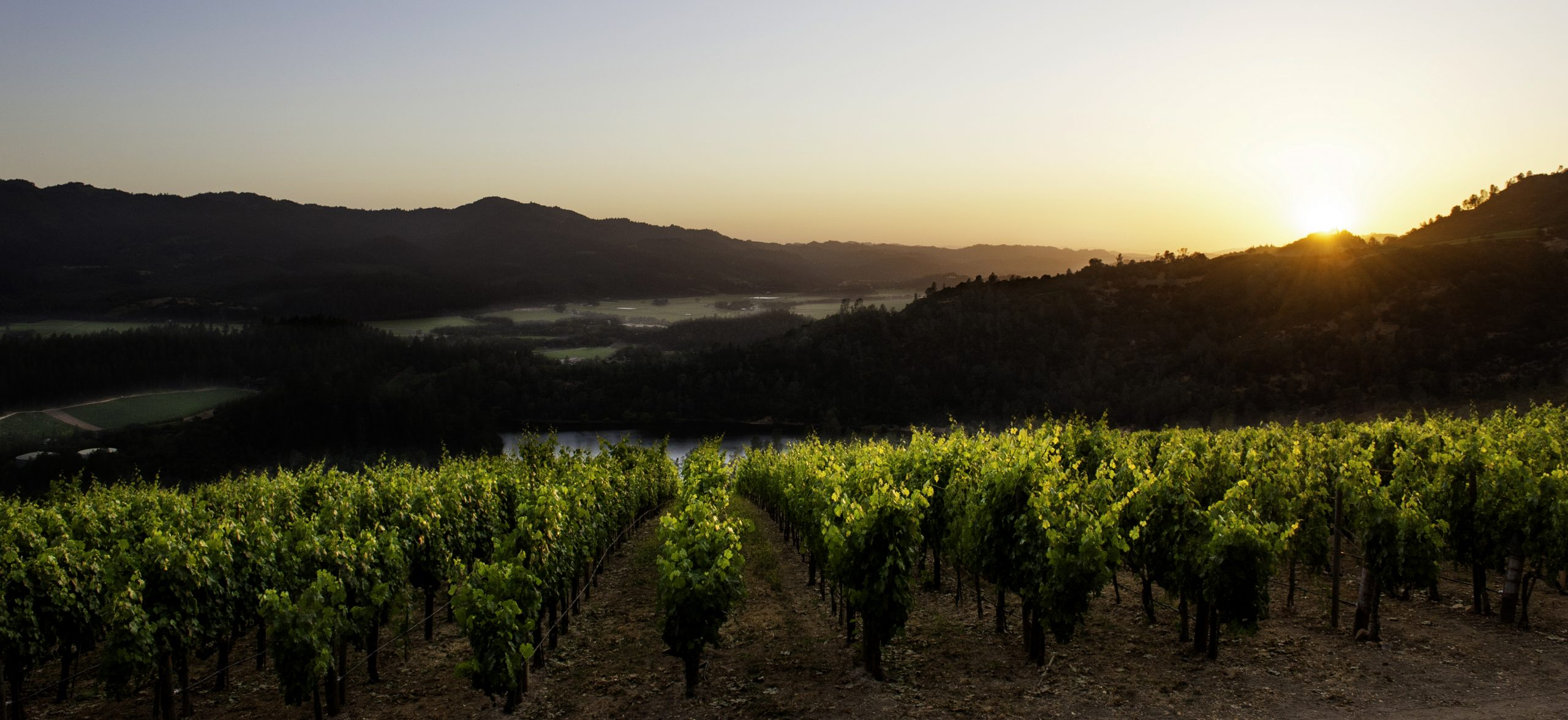 Interview with Alan Viader, Winemaker at VIADER Vineyards and Winery